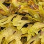 Seaweed - healing nourishing superfoods