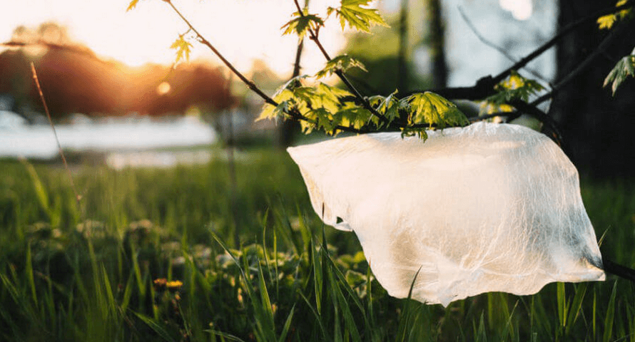 Plastic bag caught on the branch of a tree : Organico Blog