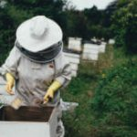 Beekeeper harvesting honey from a hive in the countryside