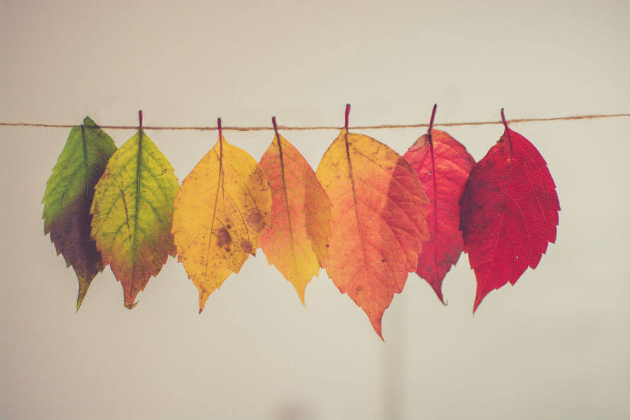 Colourful autumn leaves hanging from a string
