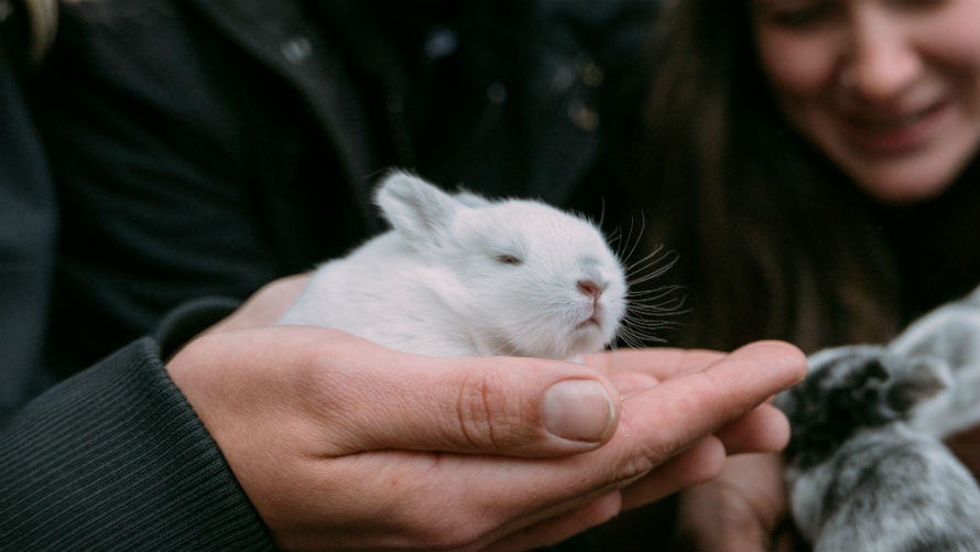 People holding rabbits